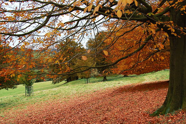 Image By Duncan Harris from Nottingham, UK (Autumn #4) [CC BY-SA 2.0 (https://creativecommons.org/licenses/by-sa/2.0)], via Wikimedia Commons